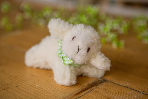 Mini-Schaf